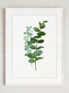Silver-dollar eucalyptus leaves art print. Green and blue leaf watercolor ...